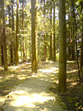 f:id:c-mizukawa:20100504030325j:image