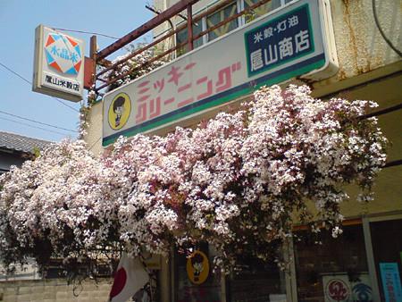 f:id:c-mizukawa:20100504030412j:image
