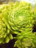 f:id:c-mizukawa:20110705223042j:image
