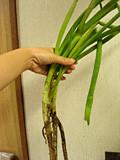 f:id:c-mizukawa:20120514013432j:image