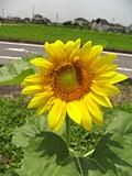 f:id:c-mizukawa:20120724195609j:image