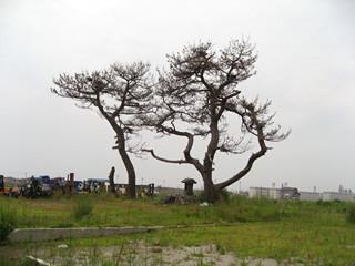 f:id:c-mizukawa:20120812204216j:image