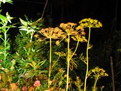 f:id:c-mizukawa:20120823124851j:image