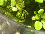 f:id:c-mizukawa:20120904001659j:image