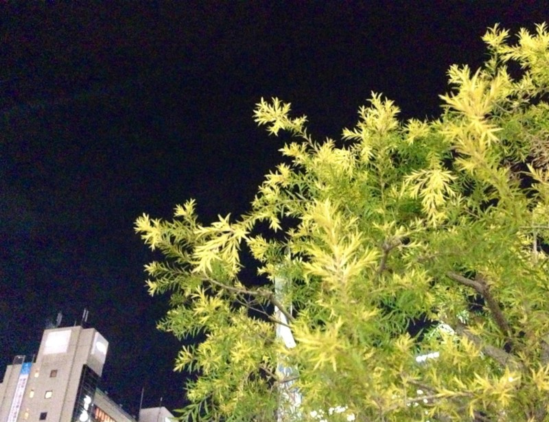 f:id:c-mizukawa:20130108212131j:image:w190