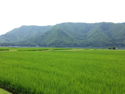 f:id:c-mizukawa:20130729083559j:image:w160