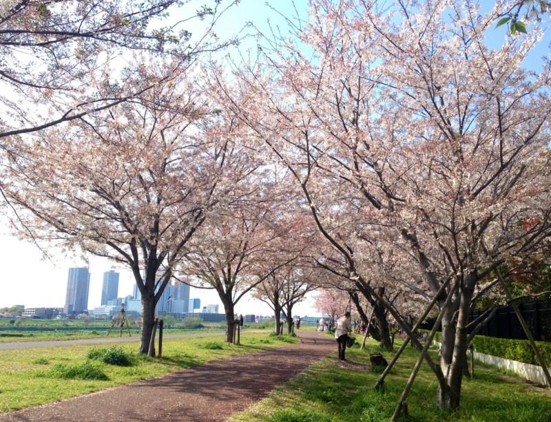 f:id:c-mizukawa:20140413221848j:image:w360