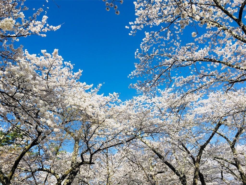 f:id:c-mizukawa:20180413152542j:image