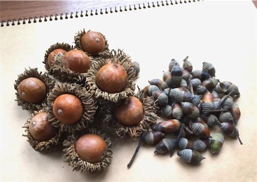 f:id:c-nuts:20201018180506j:image