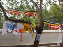 菩提樹の分け木