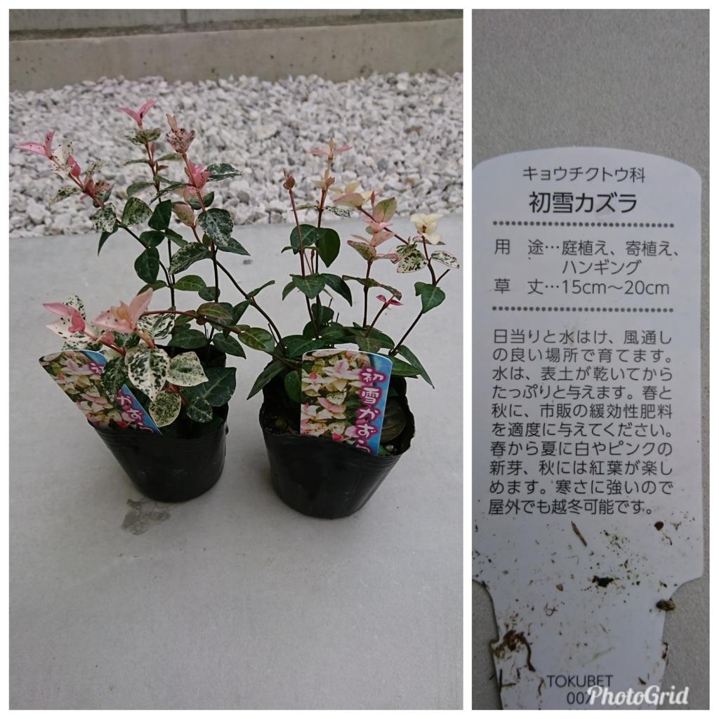 f:id:c-satoko:20171128205818j:plain