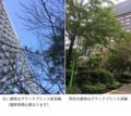 [さくらタワー][高輪][品川][ホテル][ラグジュアリー][日本庭園]ザ・プリンスさくらタワー 庭2