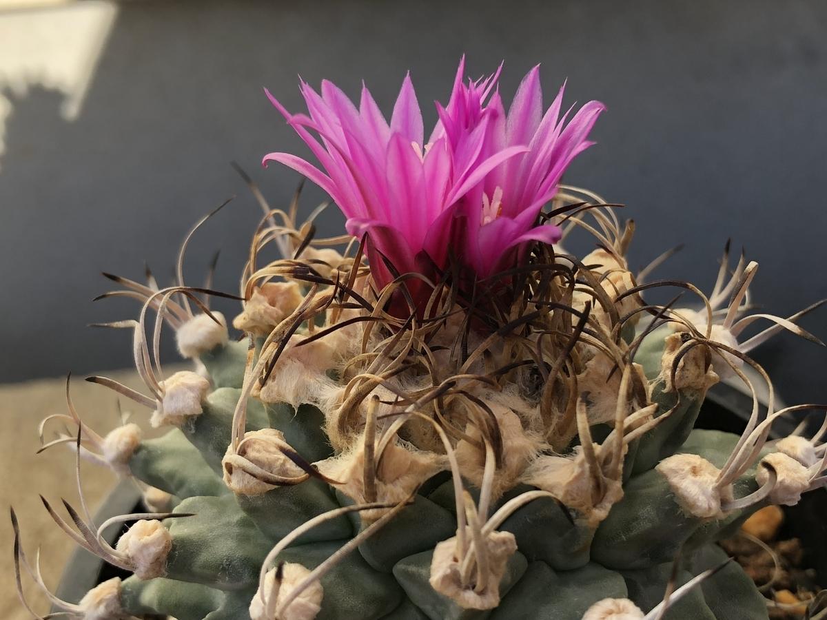 f:id:cactuspower:20201204223955j:plain