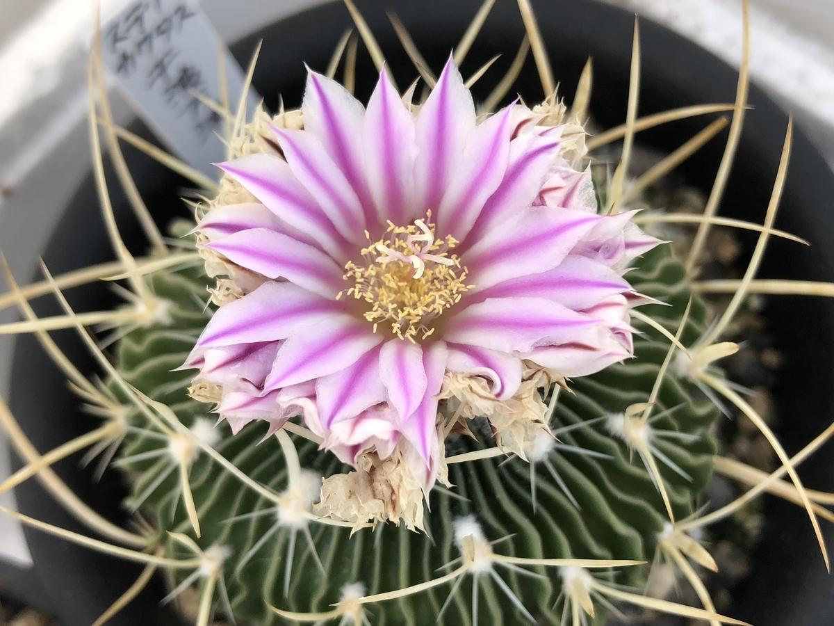 f:id:cactuspower:20210118233951j:plain