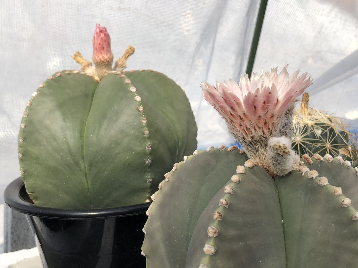 f:id:cactuspower:20210420205922j:plain