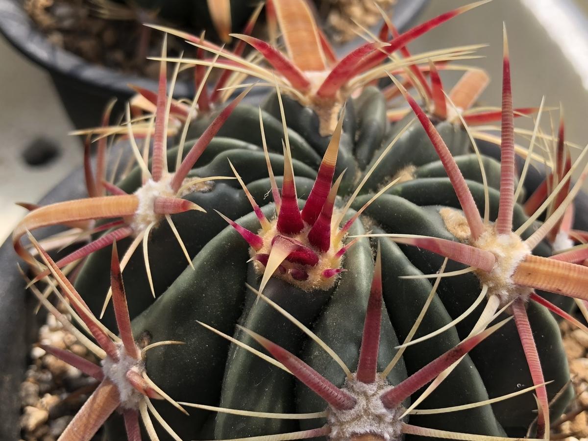 f:id:cactuspower:20210429124743j:plain