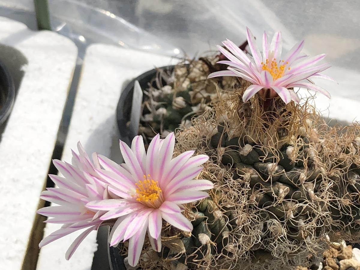 f:id:cactuspower:20210429125358j:plain