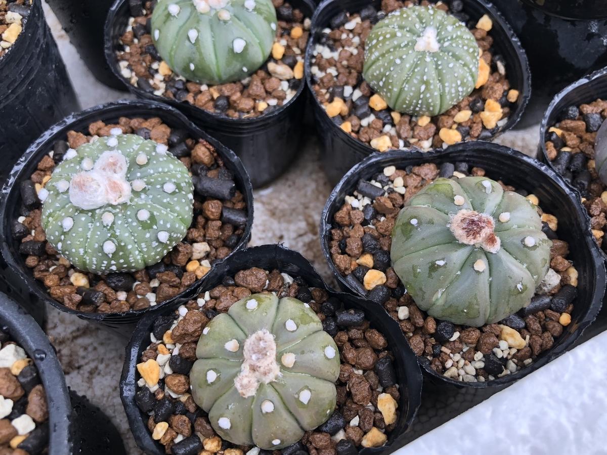 f:id:cactuspower:20210501123822j:plain