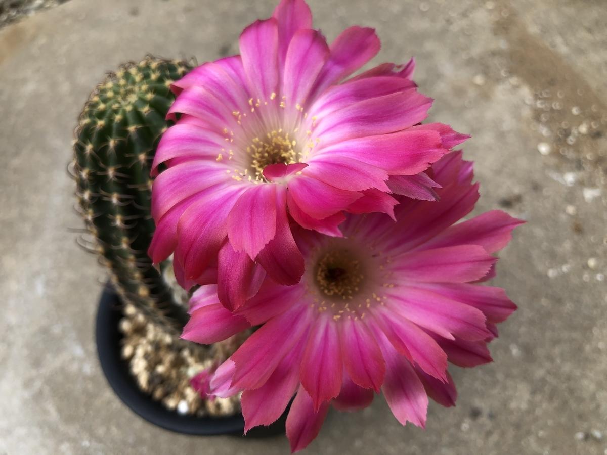 f:id:cactuspower:20210611231107j:plain