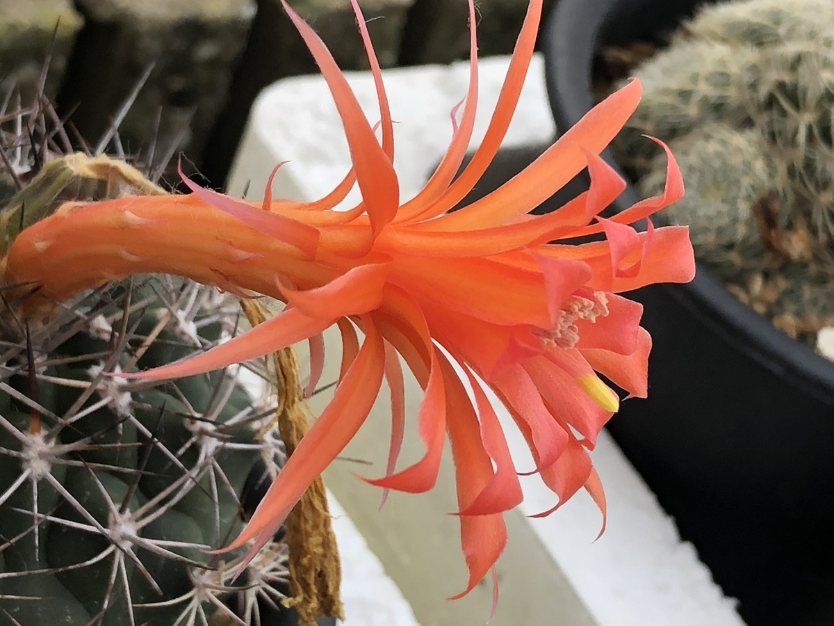 f:id:cactuspower:20210616084942j:plain