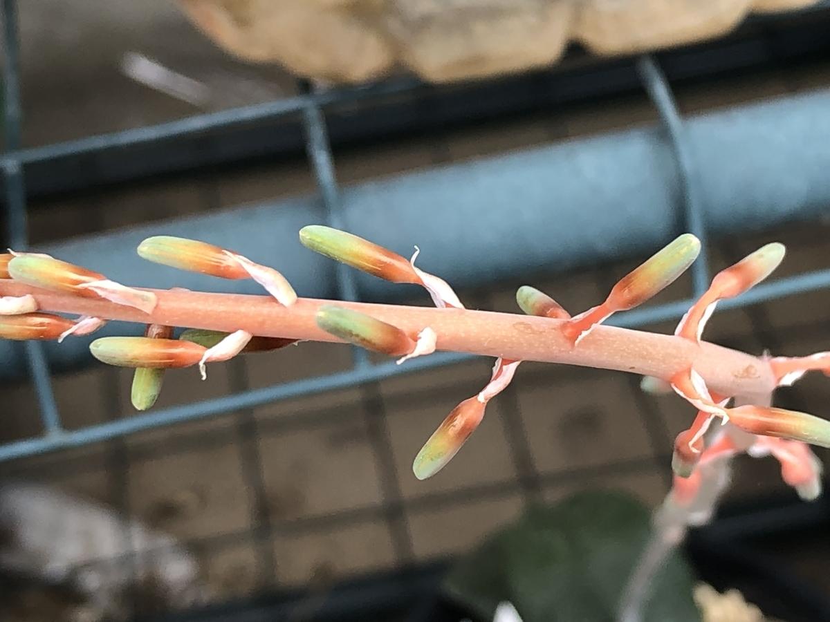 f:id:cactuspower:20210628132739j:plain