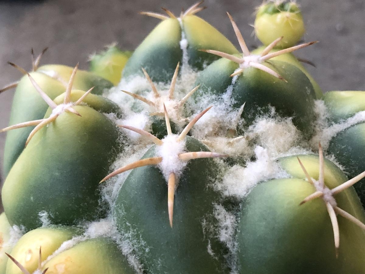 f:id:cactuspower:20210719225422j:plain