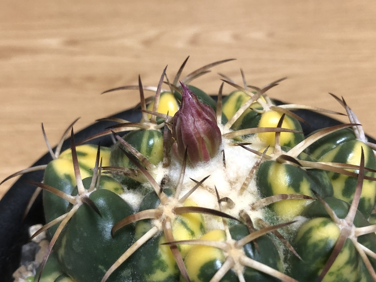 f:id:cactuspower:20210720231421j:plain