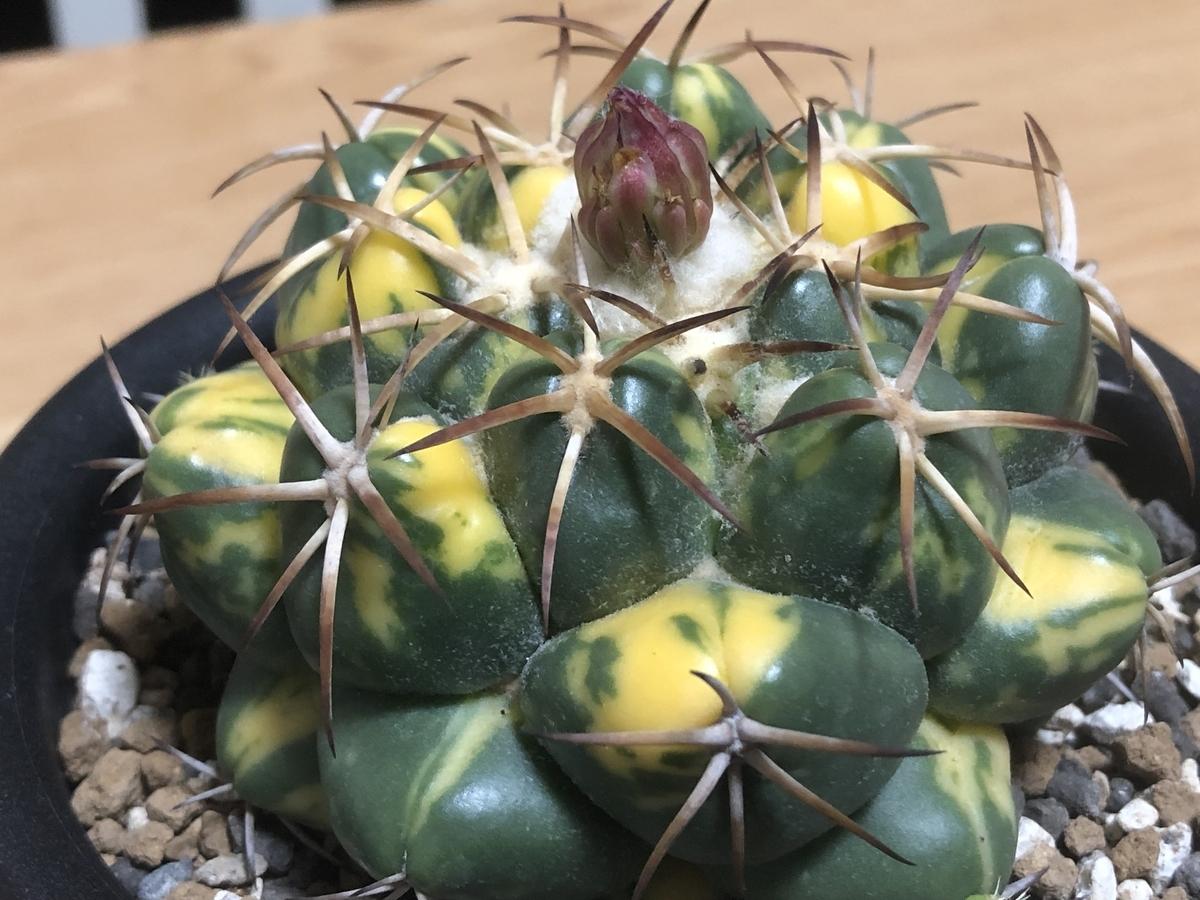 f:id:cactuspower:20210720231455j:plain