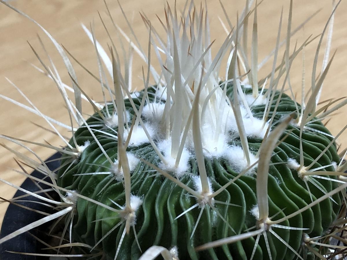 f:id:cactuspower:20210725234849j:plain