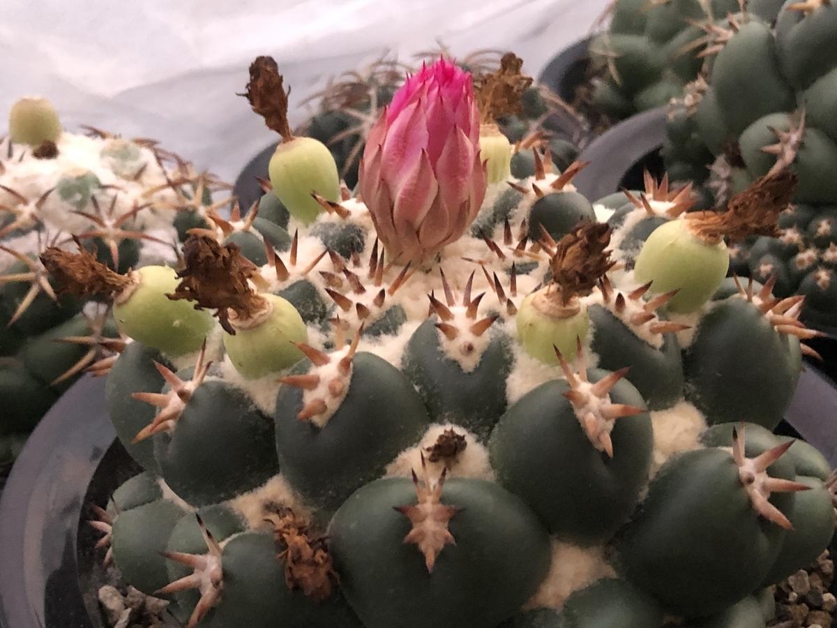 f:id:cactuspower:20210727225644j:plain