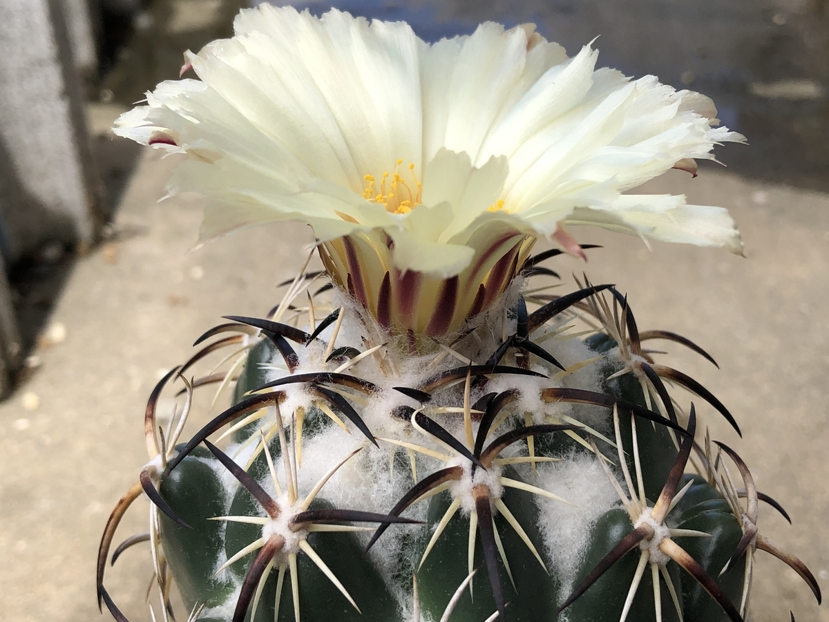 f:id:cactuspower:20210728131425j:plain