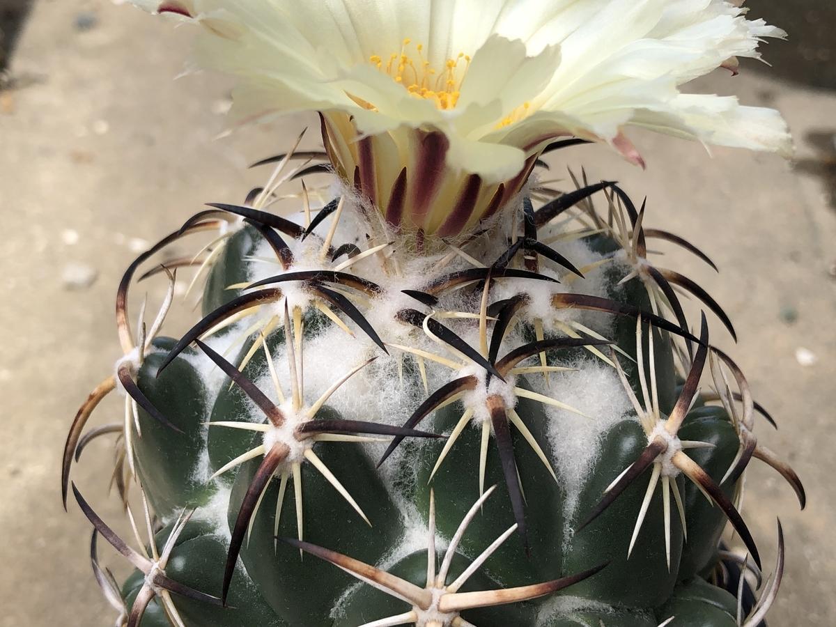 f:id:cactuspower:20210728131701j:plain