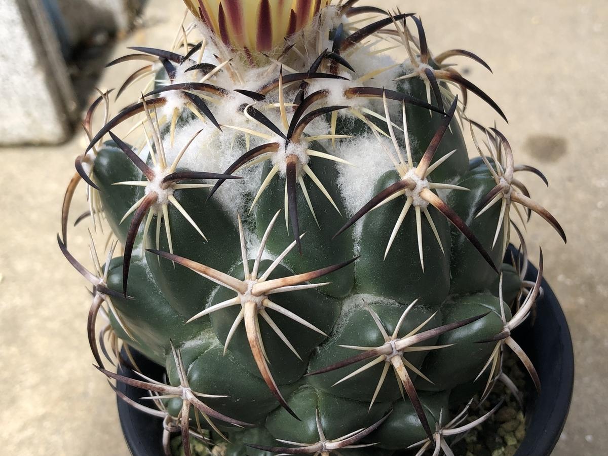 f:id:cactuspower:20210728131750j:plain