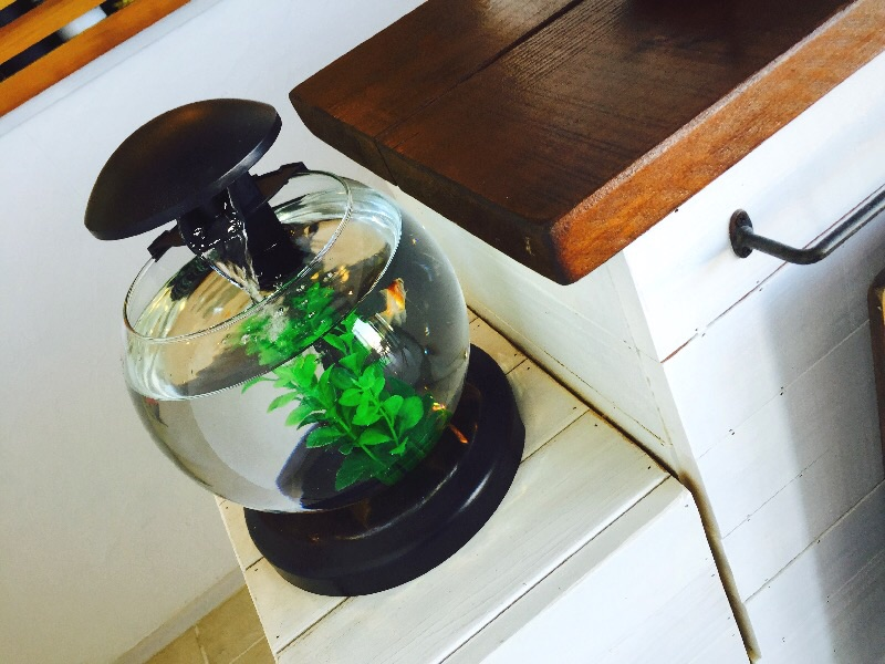 f:id:cafe-azito:20150921003954j:image:h300