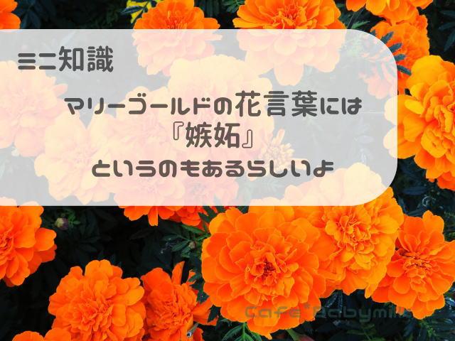 マリーゴールドの花言葉『嫉妬』