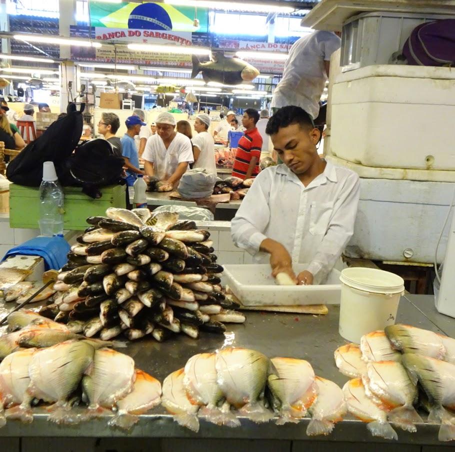 マナウスでみた芸術的な魚の積み方