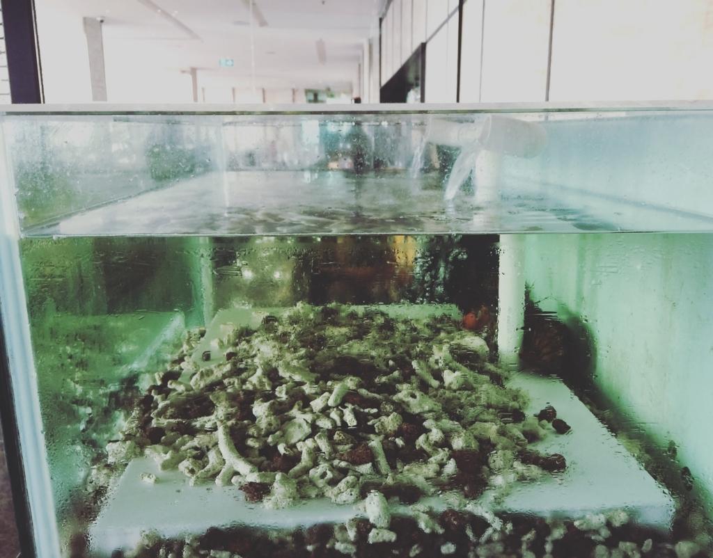 f:id:calamarie:20170803090139j:plain