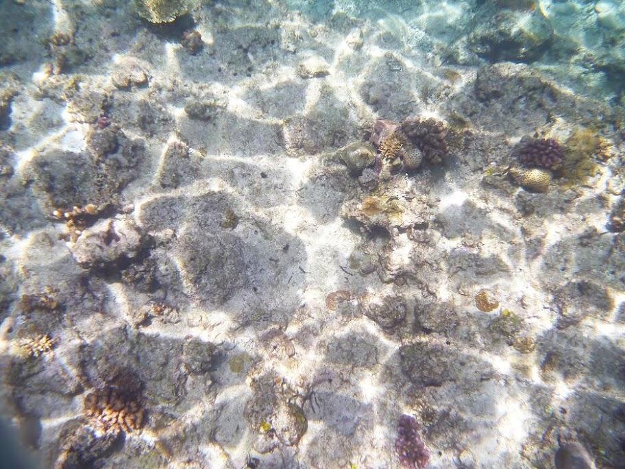 f:id:calamarie:20170928130148j:plain