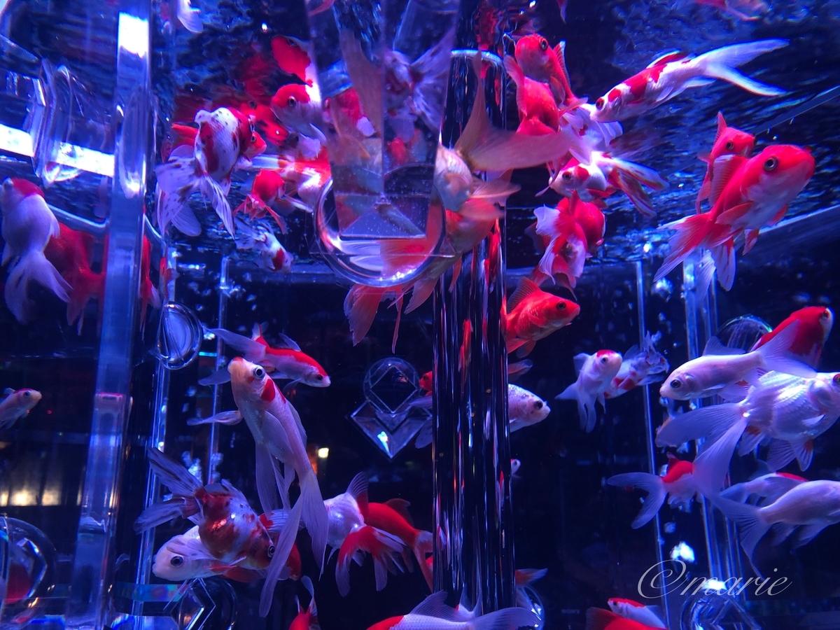 f:id:calamarie:20190912225847j:plain
