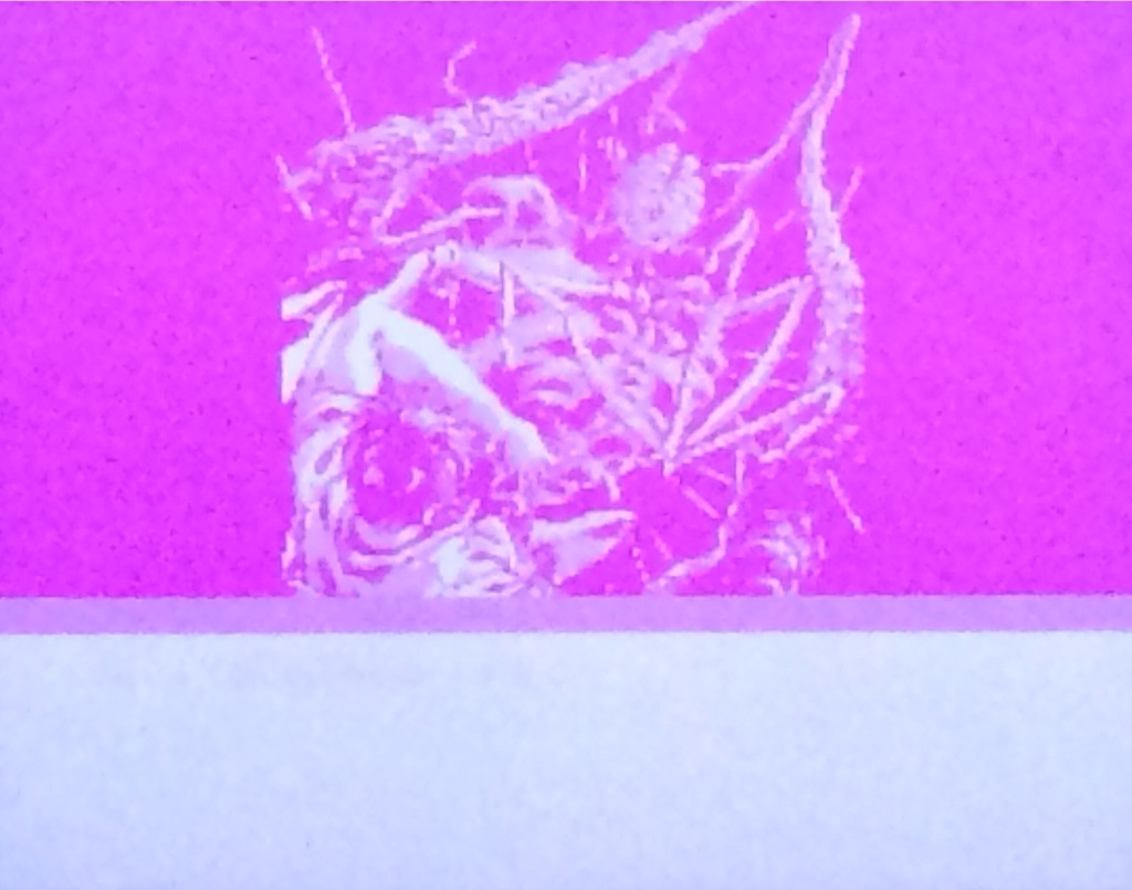 f:id:calimero0655:20150804182421j:image