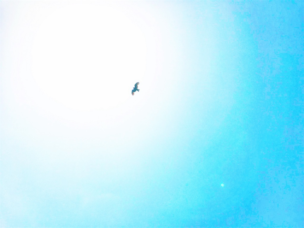 f:id:calm_earth:20180519142632j:image