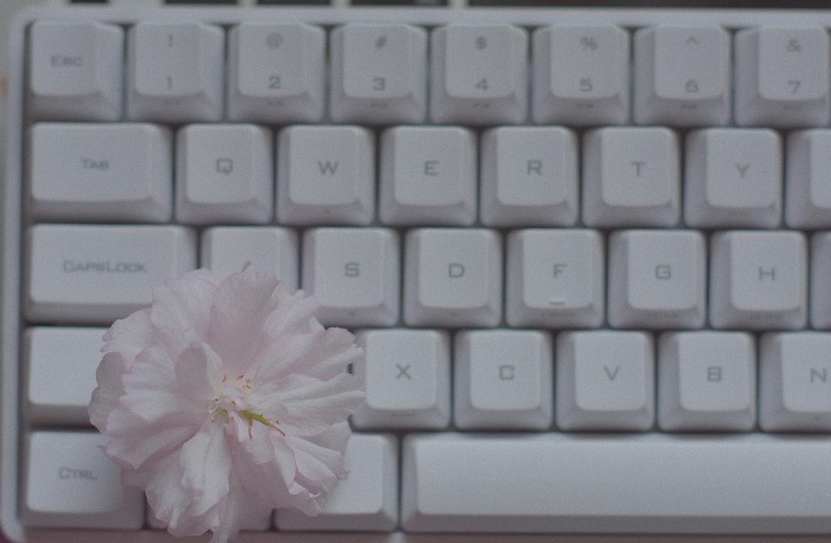 f:id:camellia48:20200816151851j:plain