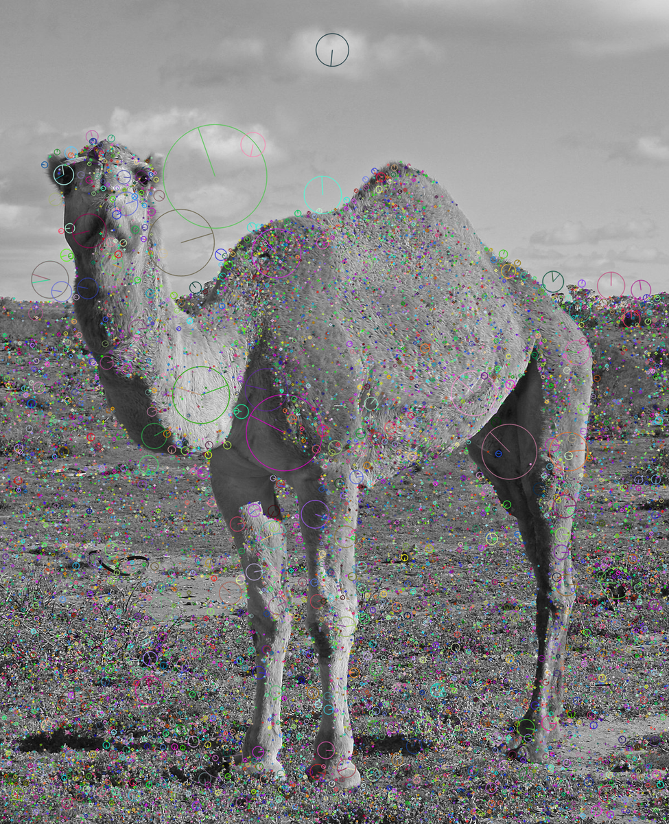 f:id:camelsan:20201128101702p:plain