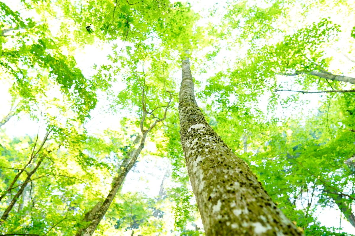 f:id:camera-yurucamp:20210713124646j:plain