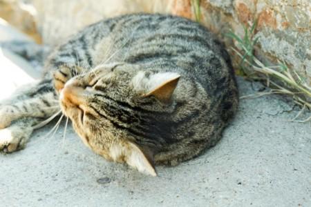 岩陰で昼寝