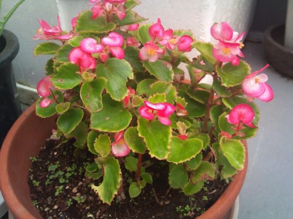 2010年10月屋上の花