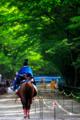 京都新聞写真コンテスト  緑の勇姿