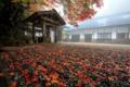京都新聞写真コンテスト  雨の元三大師堂
