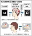 夢を映像化!? 脳内画像を脳活動から再現