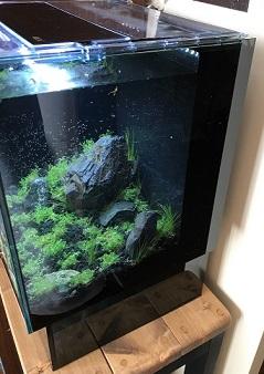 熱帯魚水槽の立ち上げ